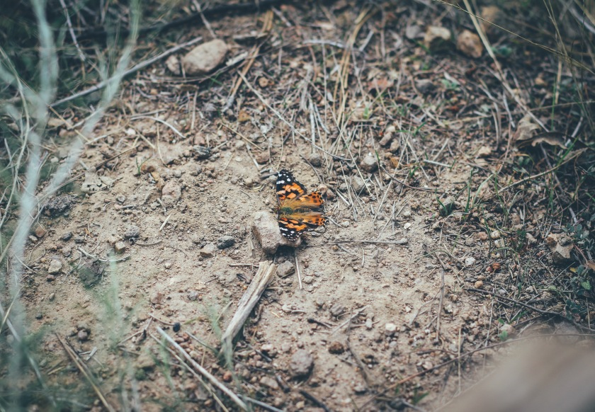 Butterfly in the middle of the dirt on top of rock. it looks like something beautiful in a mess of dirty